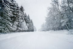 Road In Forest Covered With Snow On A Calm Snowy Day Stock Images
