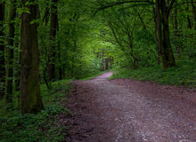 Road In Mystical Dark Forest Royalty Free Stock Images