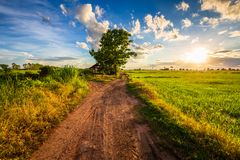 Road In Sunset Rice Field Stock Photography