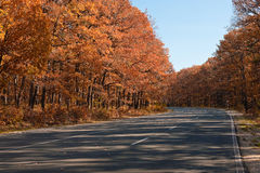 Road In The Forest Royalty Free Stock Images