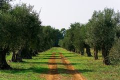 Free Road In The Garden Royalty Free Stock Photos - 10175358