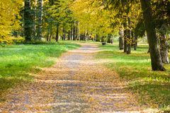 Road In The Park Royalty Free Stock Images