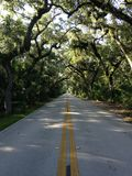 Road In Woods At Tomoka State Park In Florida. Stock Photo