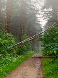 Road incident. Storm knocked down trees on a forest road Royalty Free Stock Photography