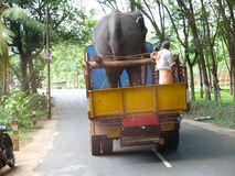 On the road in India Royalty Free Stock Photo