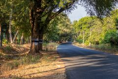 Road isolated with green tree covered royalty free stock photo