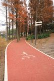 Road for jogging at shanghai autumn city park. Racing track Stock Images
