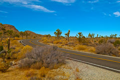Road through Joshua Tree Royalty Free Stock Image