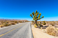 Road in Joshua Tree National Park. California, USA Stock Photos