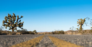 Road through Joshua Tree National Park Royalty Free Stock Photography