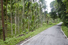 Road through a jungle Royalty Free Stock Image