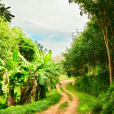 Road in Jungle Royalty Free Stock Photography