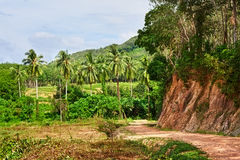 Road in Jungle Stock Image