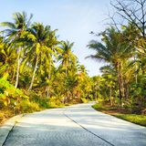 Road in Jungle Stock Images