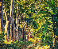 Road in Jungle Stock Photo
