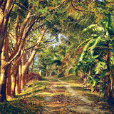 Road in Jungle Royalty Free Stock Photos