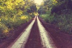 Road in jungle Stock Image