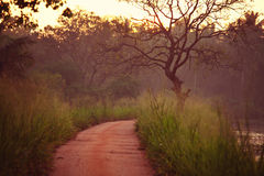 Road in jungle Stock Photography
