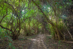 Road in jungle forest Royalty Free Stock Images