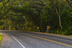 Road in the jungle Royalty Free Stock Photo
