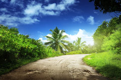 Road in jungle. Of La Digue island, Seychelles Royalty Free Stock Photo