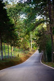 Road in the jungle in northern of Thailand Royalty Free Stock Photography