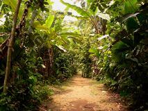 Road through the jungle, panama. Water paths through the jungle, panama, central america Stock Image