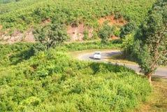Road through the jungle scrub Stock Photo