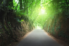 Road in jungle of Seychelles Stock Photography