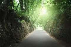 Road in jungle of Seychelles Stock Images