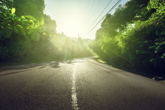 Road in jungle of Seychelles Stock Image