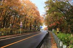 Road in Kawaguchiko during Autumn Stock Image