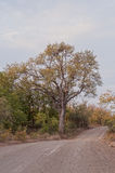 Road in Kruger Park Stock Photo