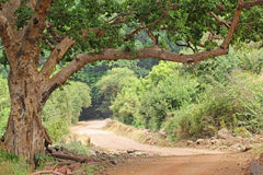 Road in Lake Manyara National park Tanzania Stock Images