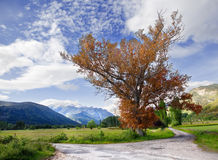 Road and landscape. Rural landscape with beautiful tree and fields royalty free stock photography