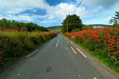 Road in landscape of Ireland Royalty Free Stock Images