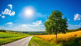 Landscape in summer with bright sun stock photo
