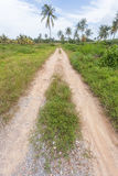 Road lane in countryside with grass and soil in sunny day Stock Image