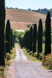 Rolling hils of California vineyards. Road leading into a California winery near Alexander Valley Stock Photography