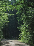 Road leading into dark forest. Ground road leading into dark forest framed by illuminated trees stock images