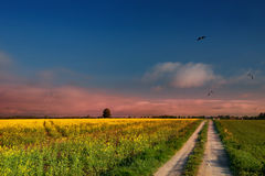 The road leading through the fileds Stock Photo