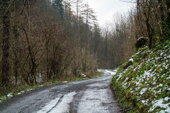 A road leading through the forest in fall. A snaking itself through a brown and green forest with some snow on the ground Stock Images