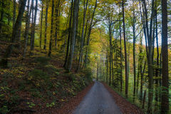A road leading through the forest in fall. A road in a Swiss forest leading through the forest in fall Stock Photography