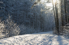 Road leading through magic snowy forest Royalty Free Stock Images