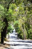 Road leading through natural Australian bushland in Adelaide Hills. Road leading through natural Australian bushland and native eucalyptus gum trees in Adelaide stock images