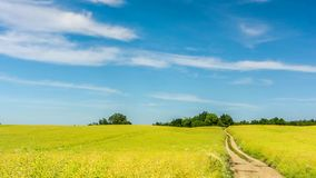Road leading through the rape field. stock video footage