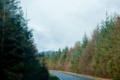 A road leading through some autumn looking trees. A road leadin through autumn looking trees on a cloudy day Royalty Free Stock Images