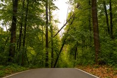 Road leading to fallen trees in the park after bad weather stock image