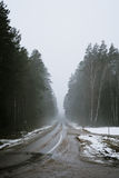 The Road Leading To The Mysterious Forest royalty free stock image