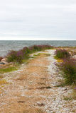 Road leading to the sea Royalty Free Stock Photo
